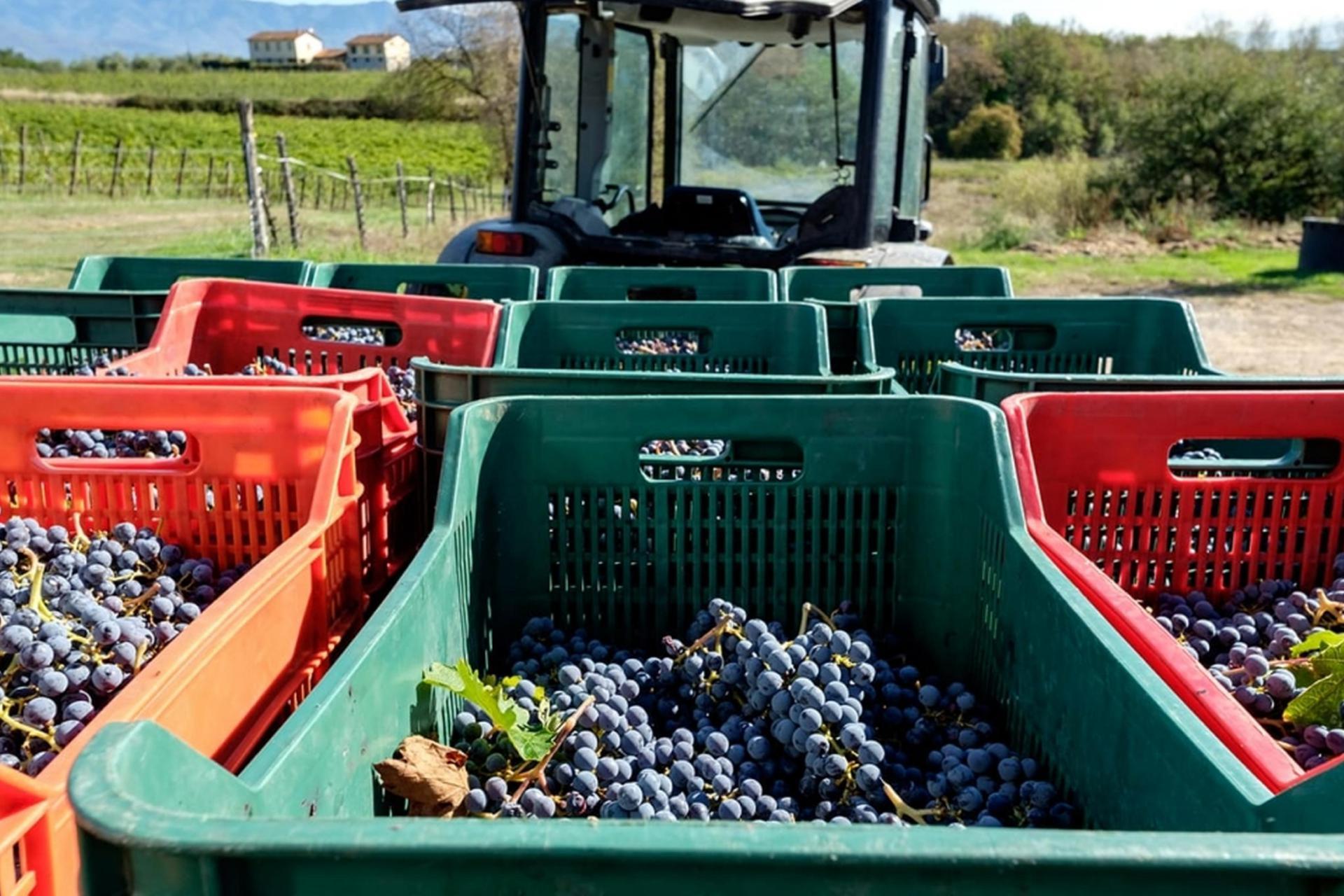 Mooie wijn- en olijfboerderij met wijnkelder