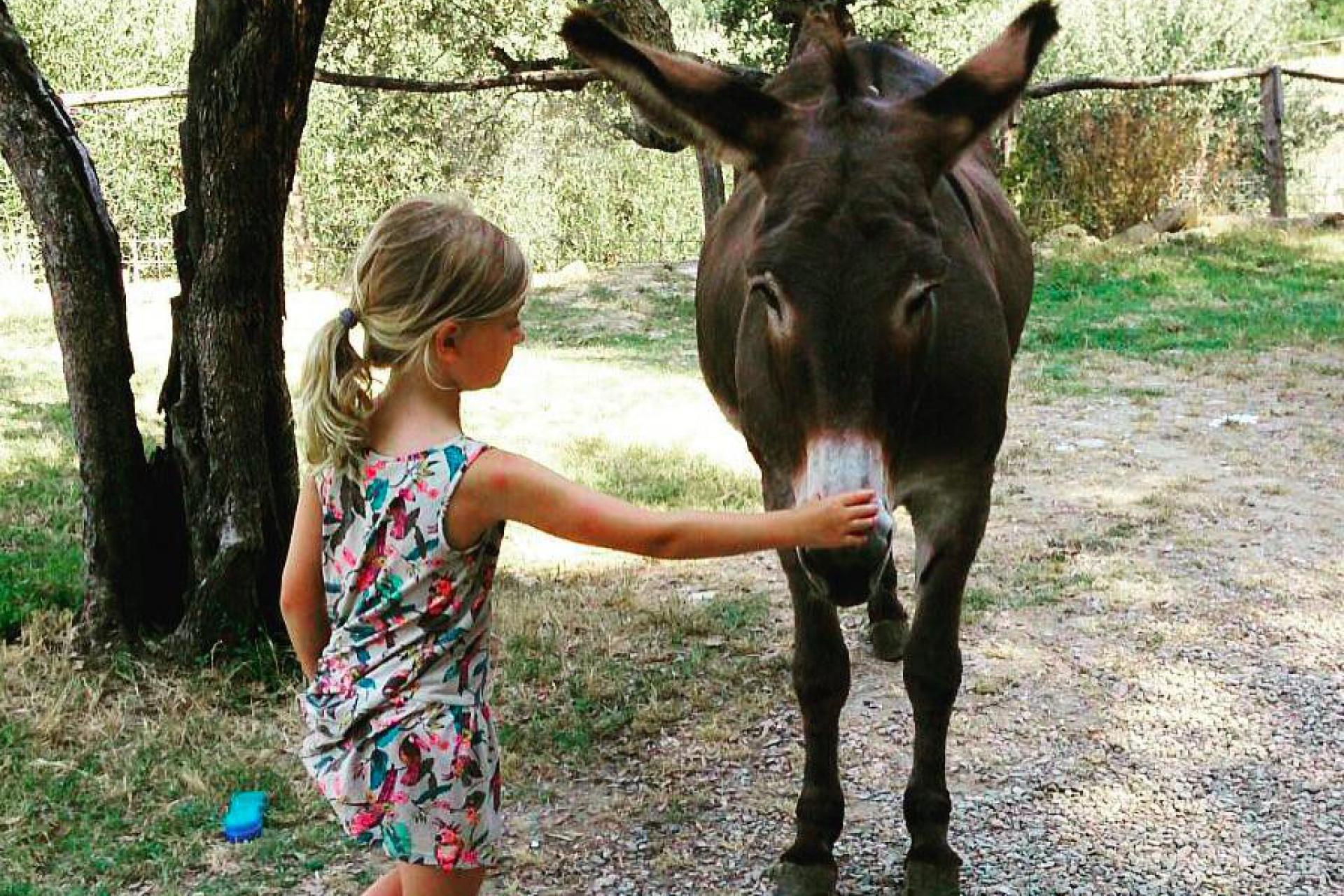 4. Gastvrije agriturismo met boerderijdieren