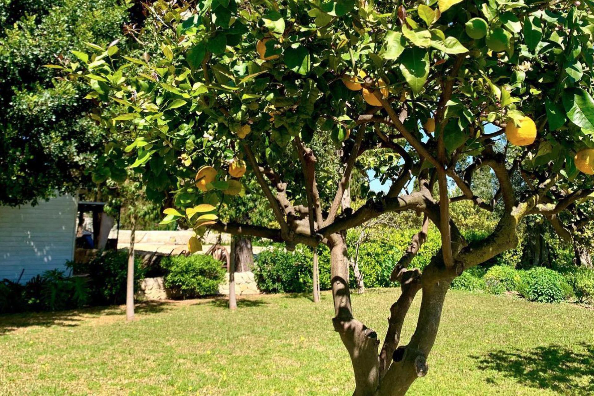 Agriturismo Sicily Sicilian citrus agriturismo near the beach
