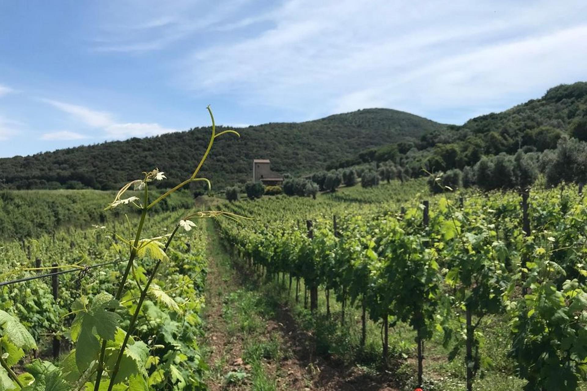Agriturismo Toscane Agriturismo wijnboerderij Toscane - Chianti-streek   myitaly.nl