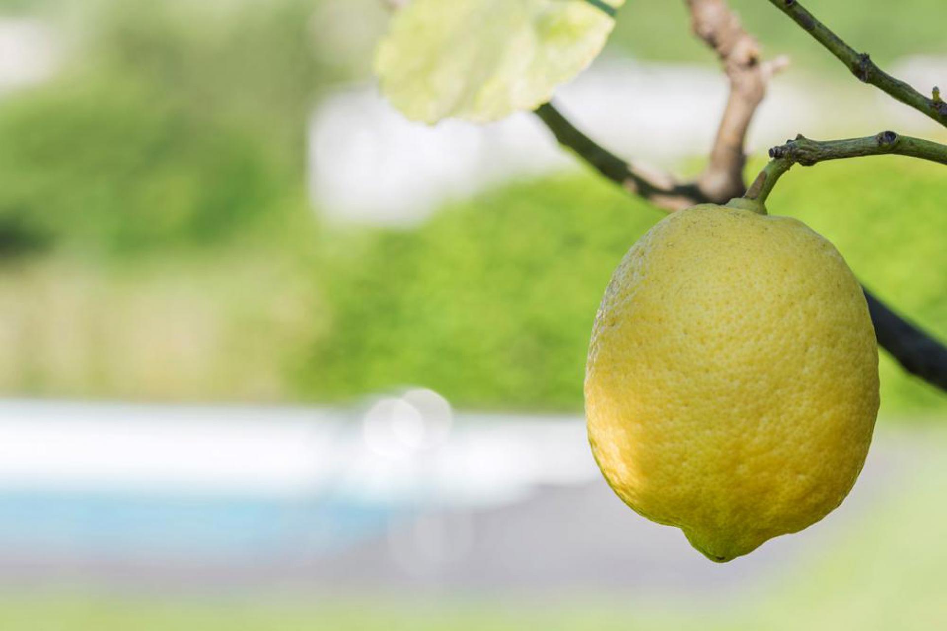 Agriturismo Comomeer en Gardameer Gezellige agriturismo op loopafstand van Comomeer | myitaly.nl