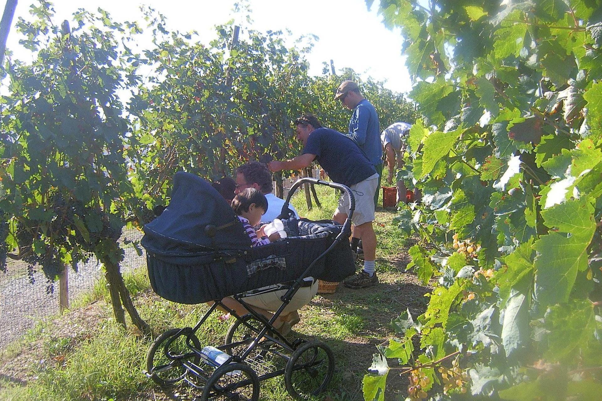 Agriturismo Le Marche Kindvriendelijke agriturismo in de heuvels van le Marche