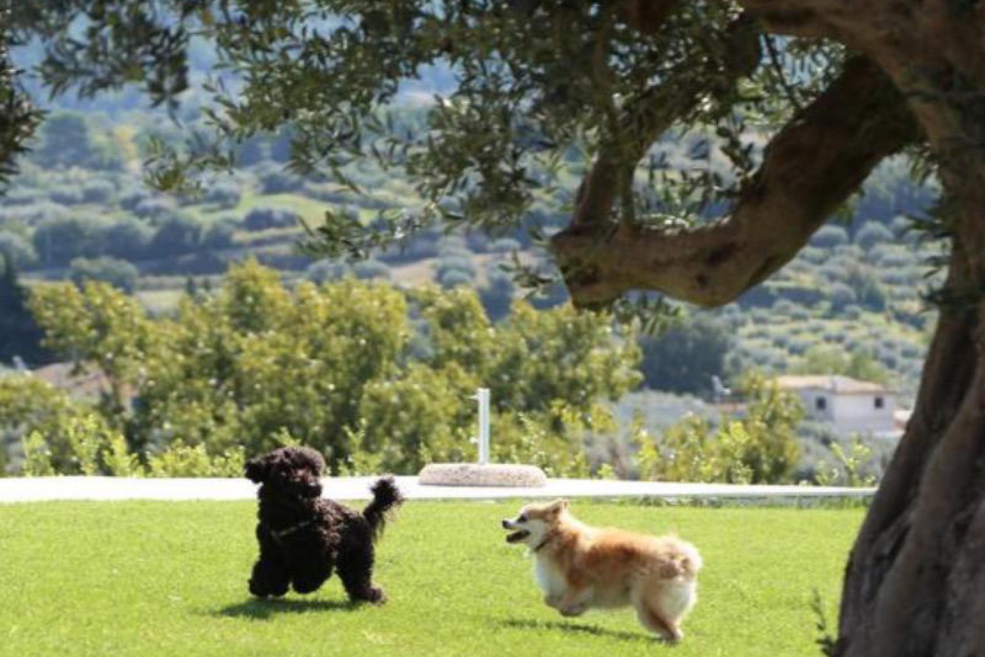 Agriturismo Sicilie Knusse agriturismo verscholen tussen amandel- en olijfbomen