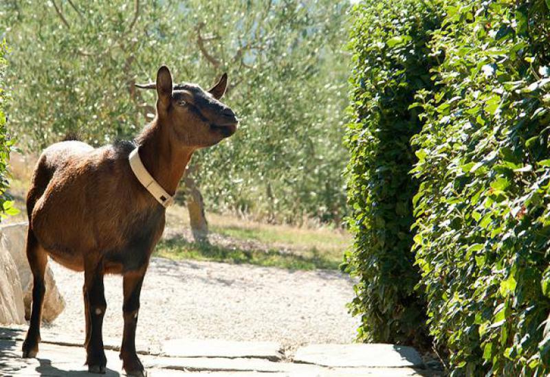 Agriturismo Umbrie Agriturismo in Umbrie voor liefhebbers van rust en natuur