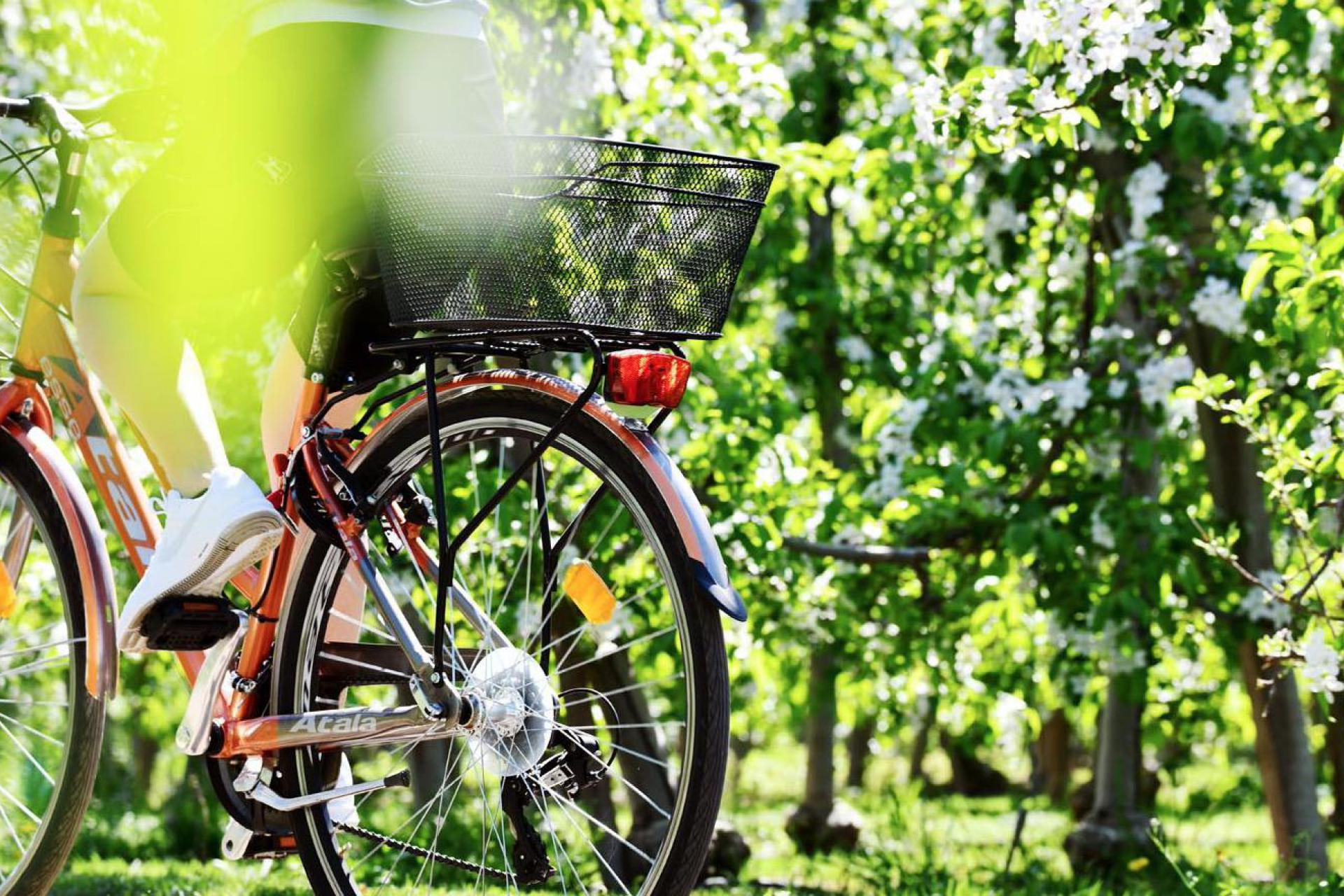 Agriturismo Dolomieten Knusse agriturismo tussen de appelbomen in de Dolomieten