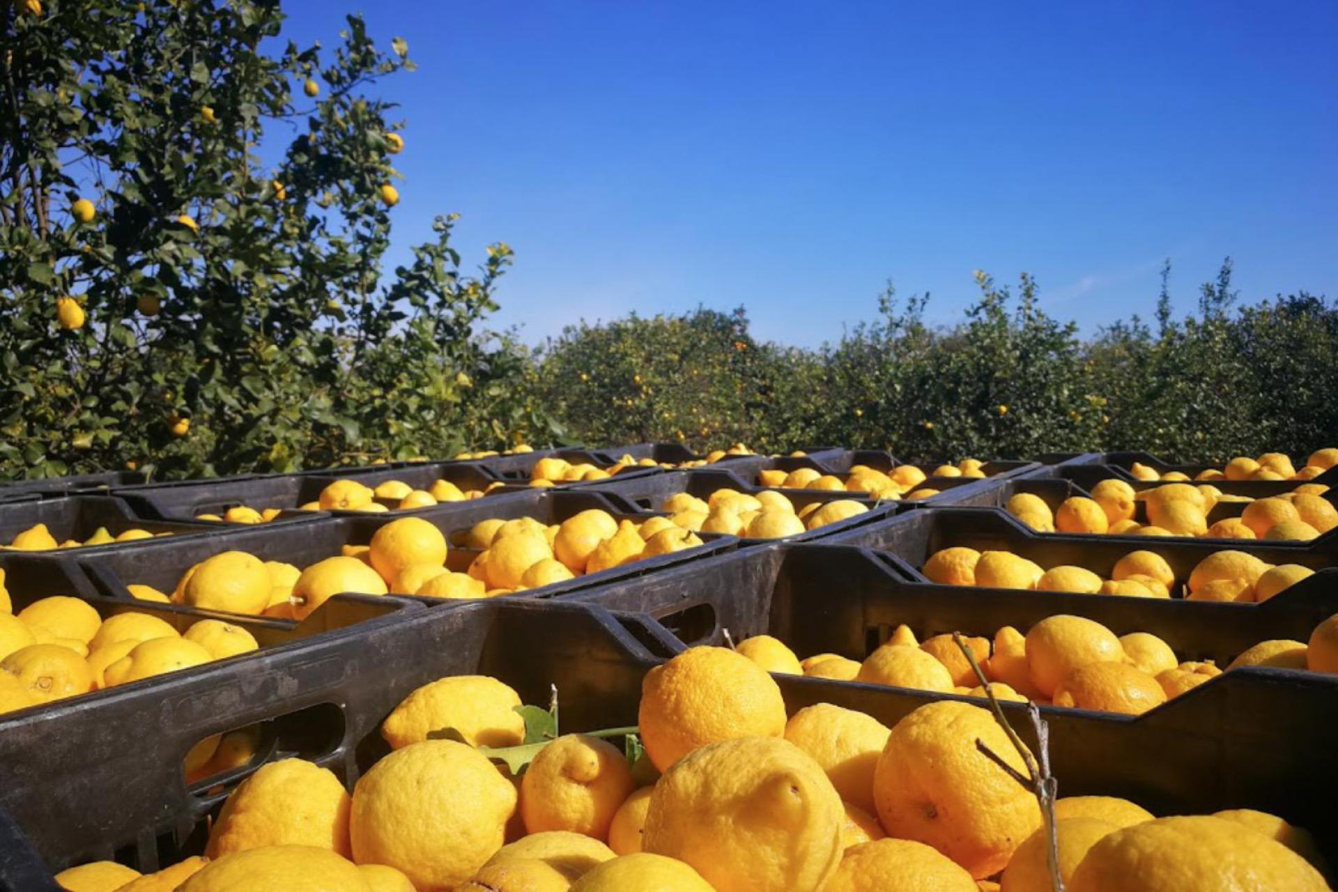 Agriturismo Sicilie Agriturismo in Sicilie omgeven door citrusbomen