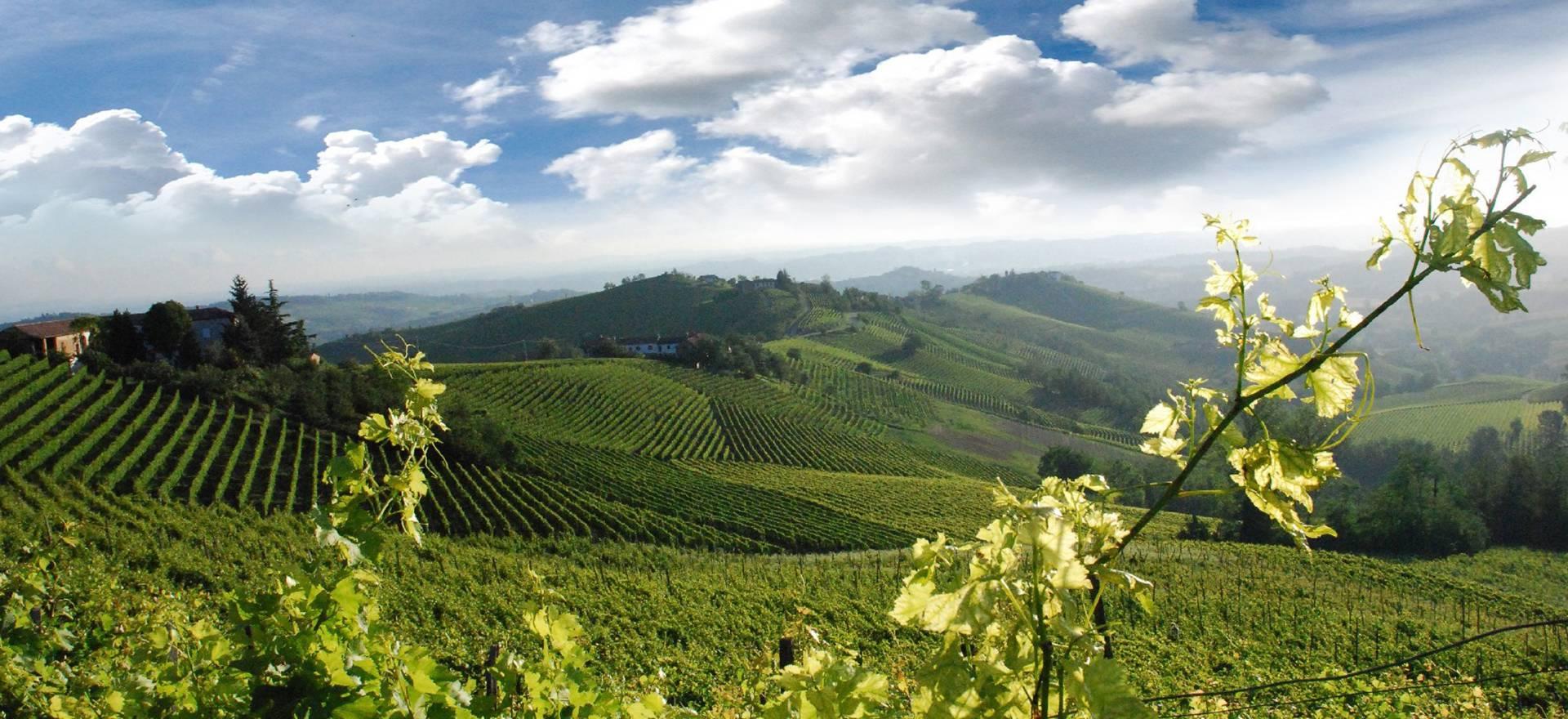 Agriturismo tussen de wijngaarden van Piemonte