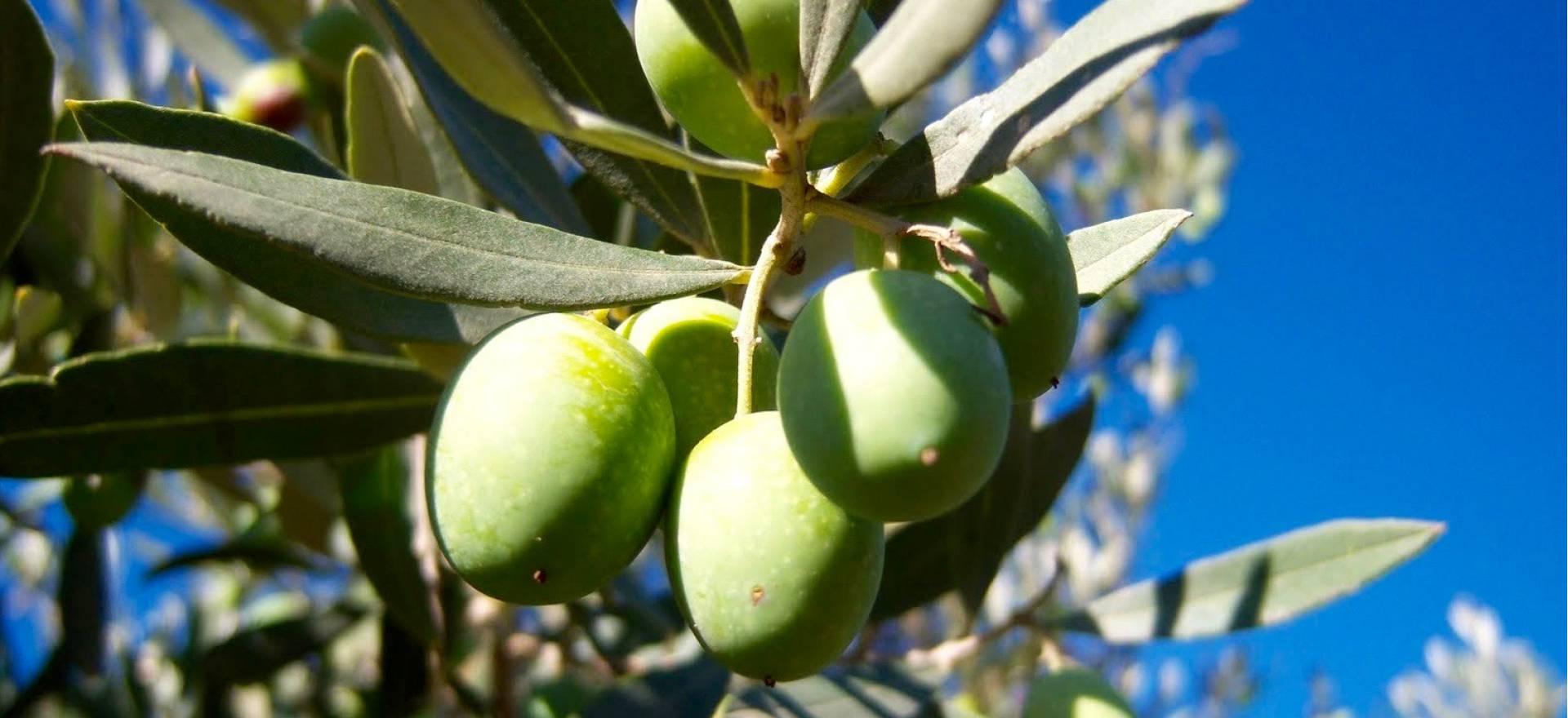 Agriturismo Sicilie Gemoedelijke agriturismo in Sicilie met restaurant
