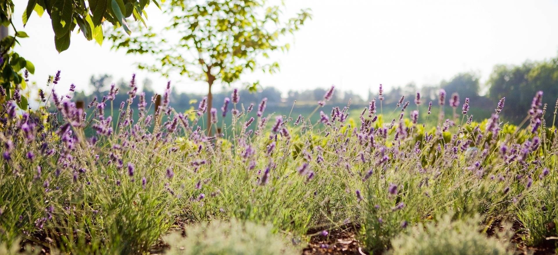 Agriturismo Le Marche Kindvriendelijk en rustig gelegen agriturismo le Marche