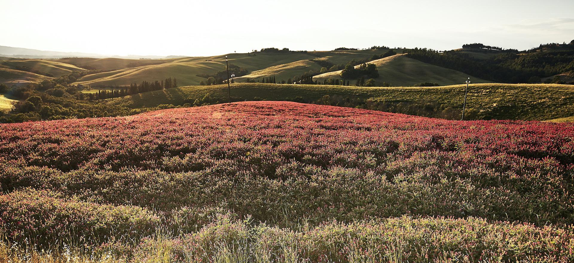 Agriturismo Toscane Kindvriendelijke agriturismo centraal gelegen in Toscane