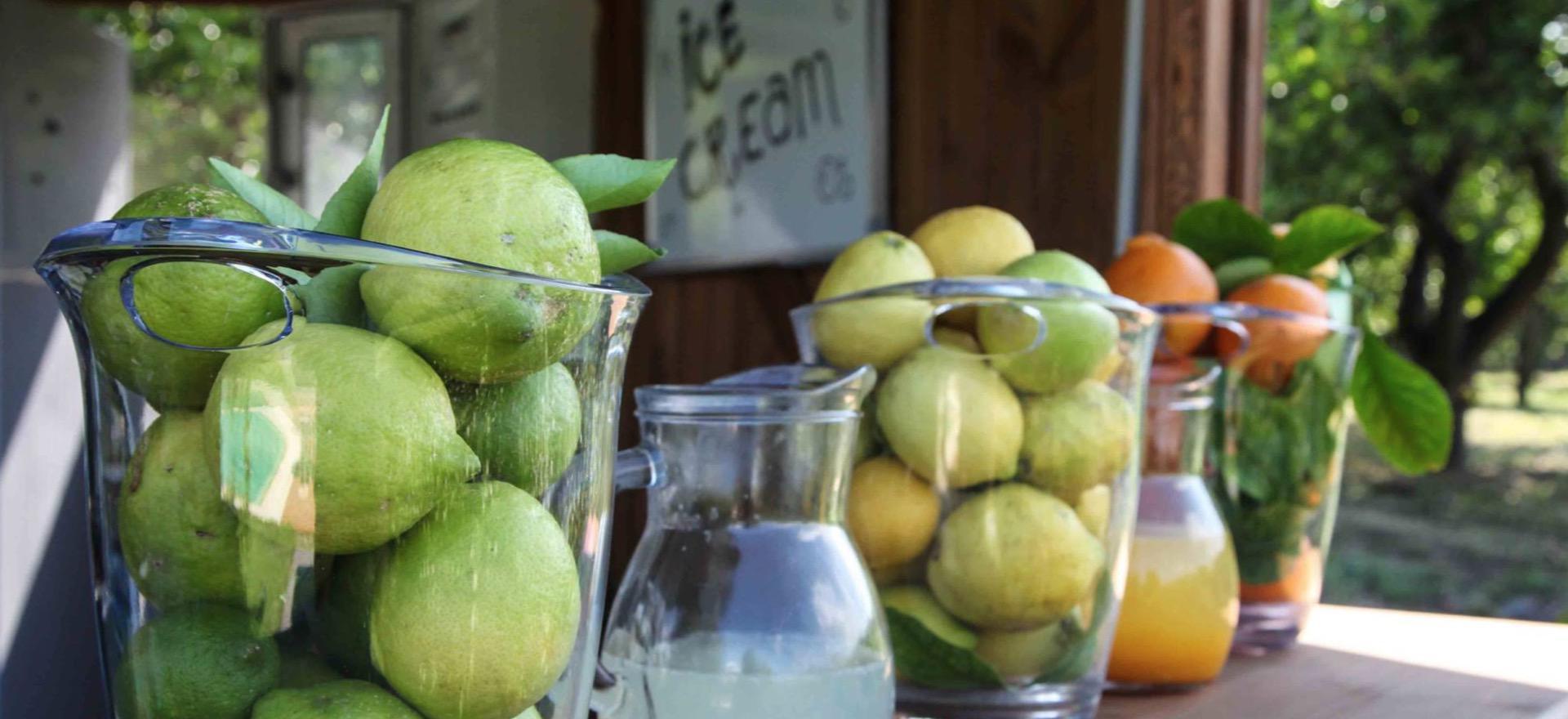 Agriturismo in Sicilie omgeven door citrusbomen