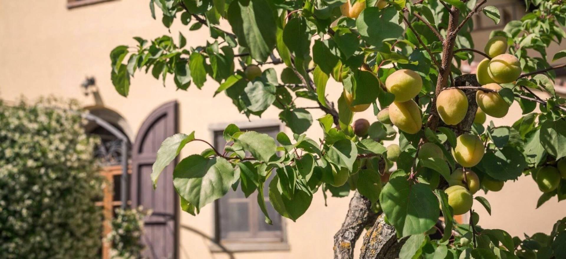 Knusse agriturismo in de chiantistreek bij Florence