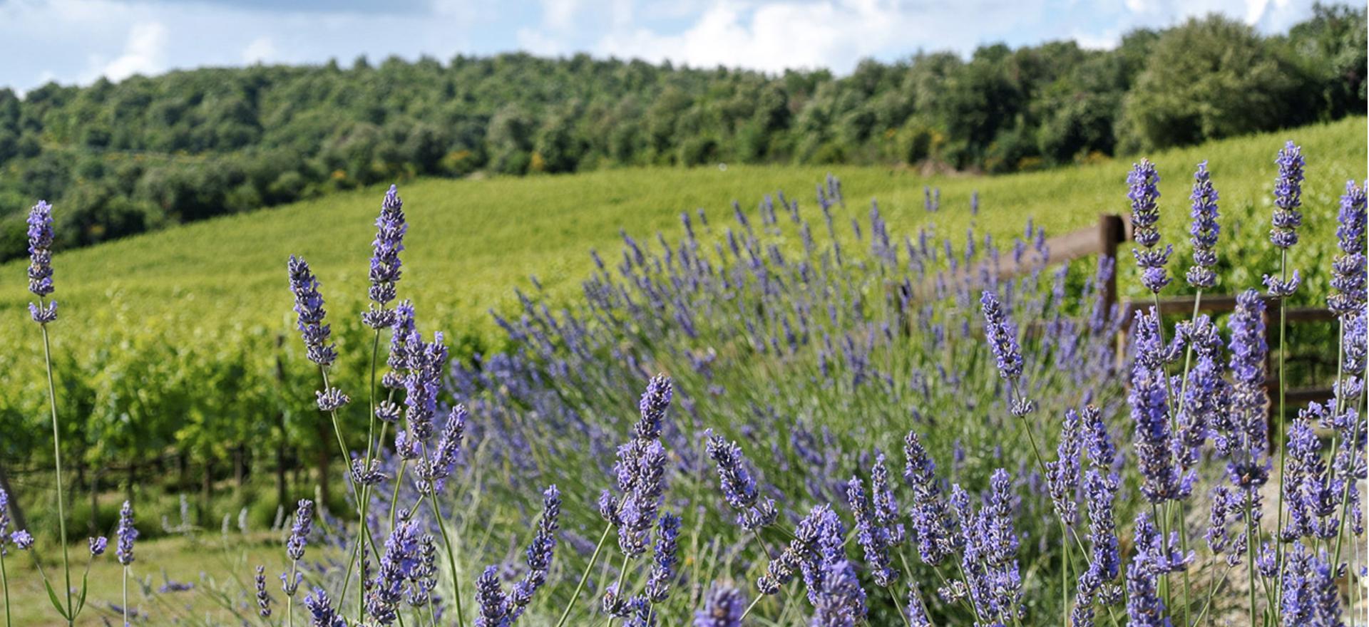 Agriturismo tussen wijngaarden ten zuiden van Siena