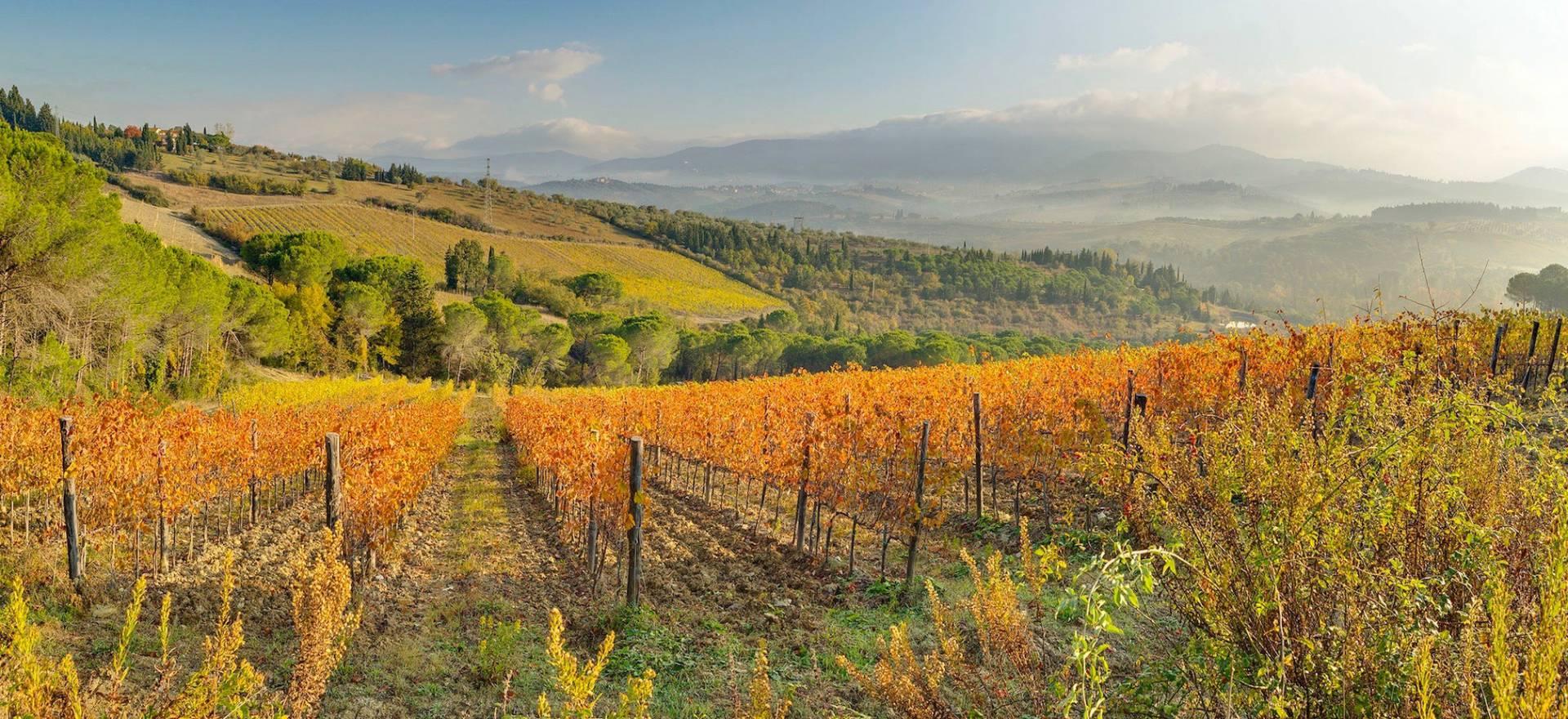 Agriturismo Toscane Agriturismo in Toscane tussen de wijngaarden bij Florence