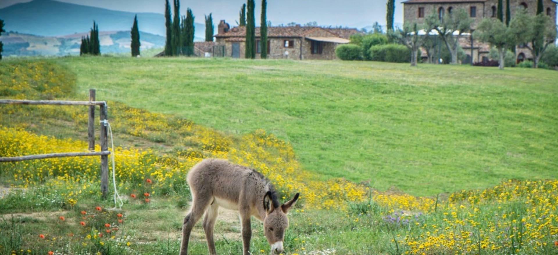 Agriturismo Toscane Agriturismo Toscane, rustig en landelijk gelegen