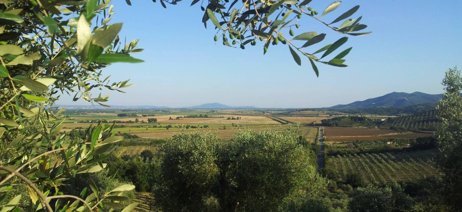 Rustig gelegen agriturismo vlakbij Toscaanse kust