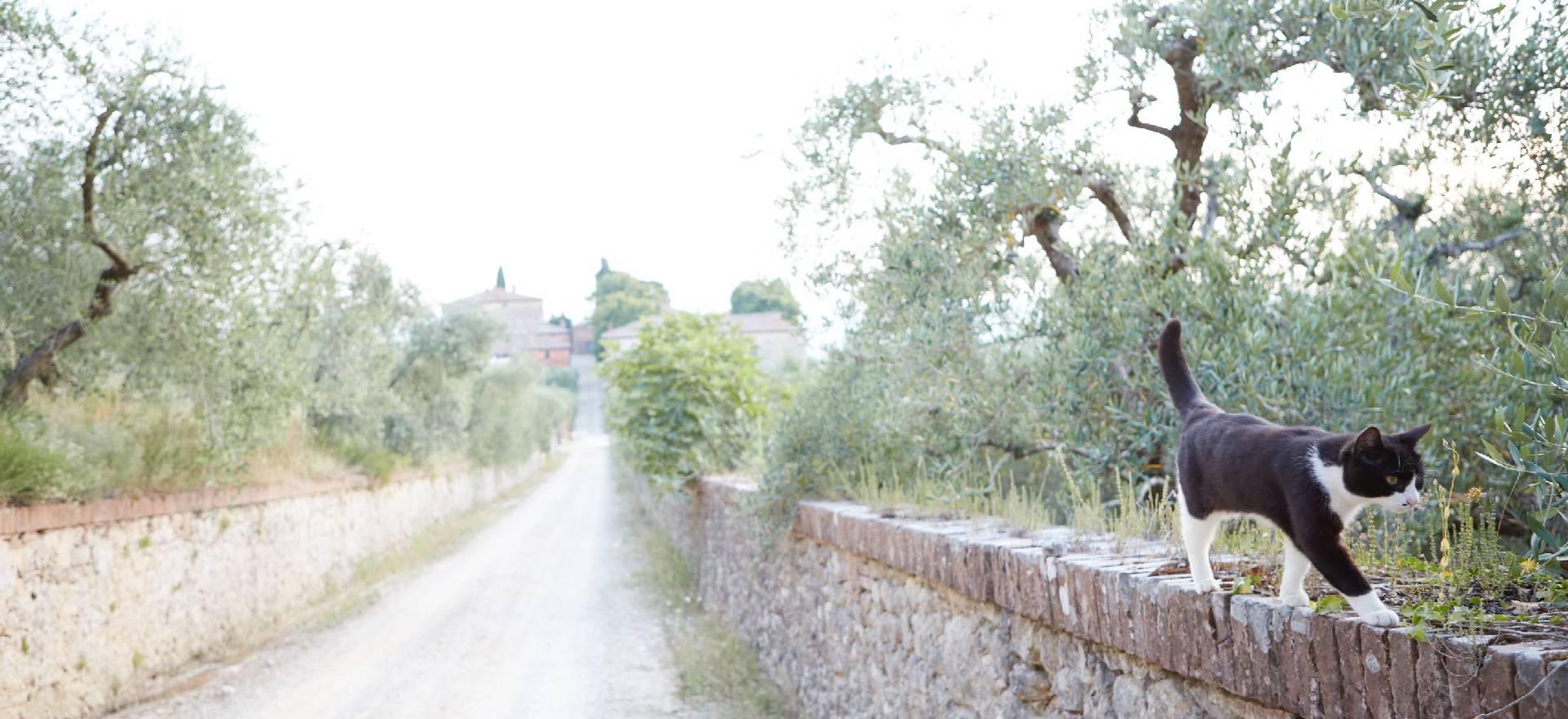 Agriturismo Toscane Verborgen parel in Toscane vlakbij Siena