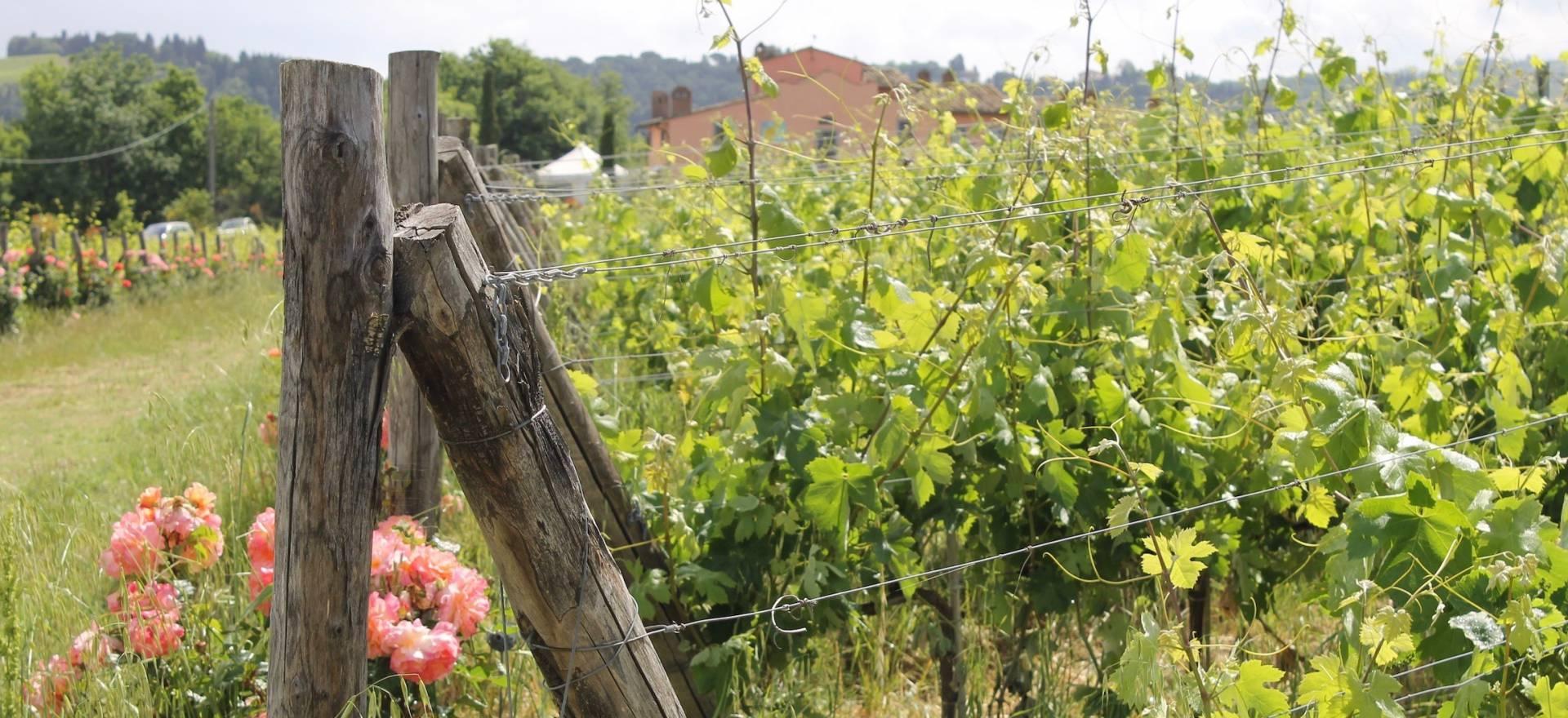 Agriturismo Toscane Wijnboerderij op een heuvel in het Chiantigebied